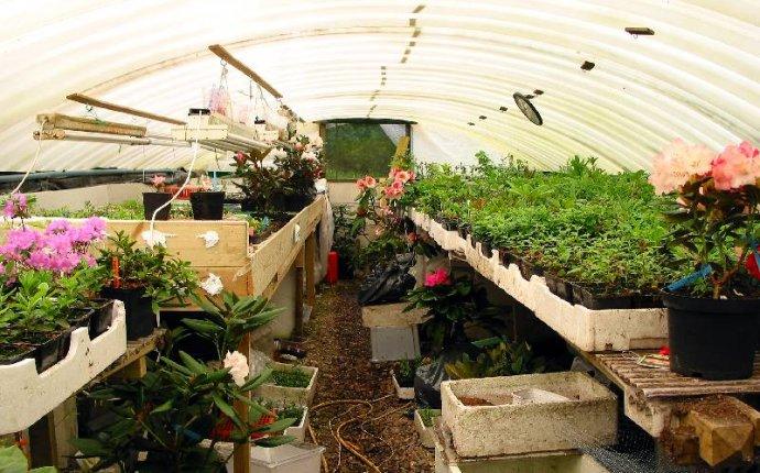 Советы по размножению рододендронов от голландского садовода-любителя